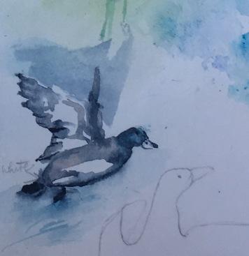 birds study 10