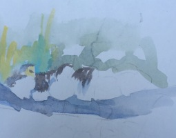 birds study 11