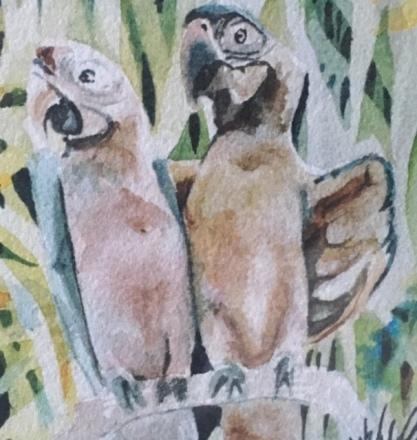 Birds study 27