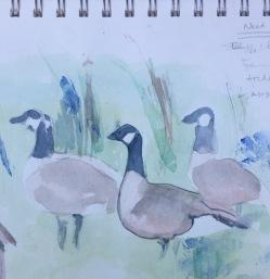 birds study 9